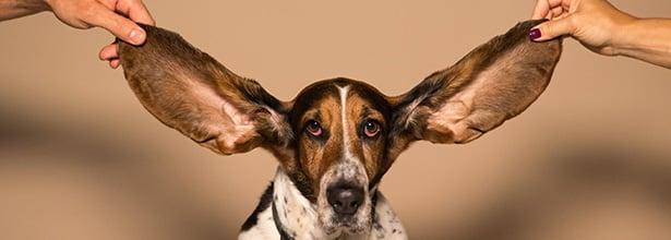 Listening Image Blog