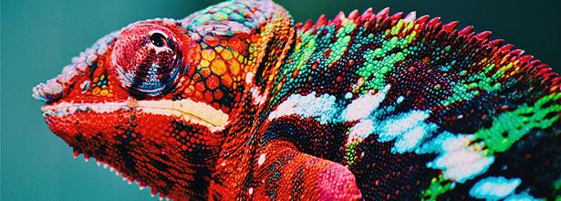 KAMA Chameleon Blog Image 19
