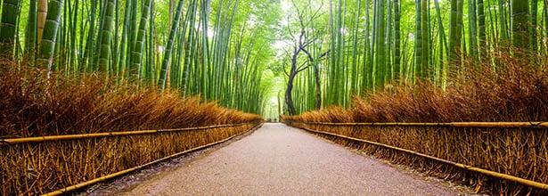 PTFL_image_bamboo_forest_edit